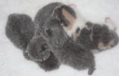 flossies-1st-litter