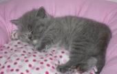 maisie-sleeping