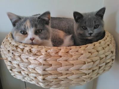 Minova and Willow